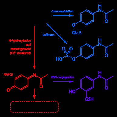 385px-Paracetamol_metabolism.svg